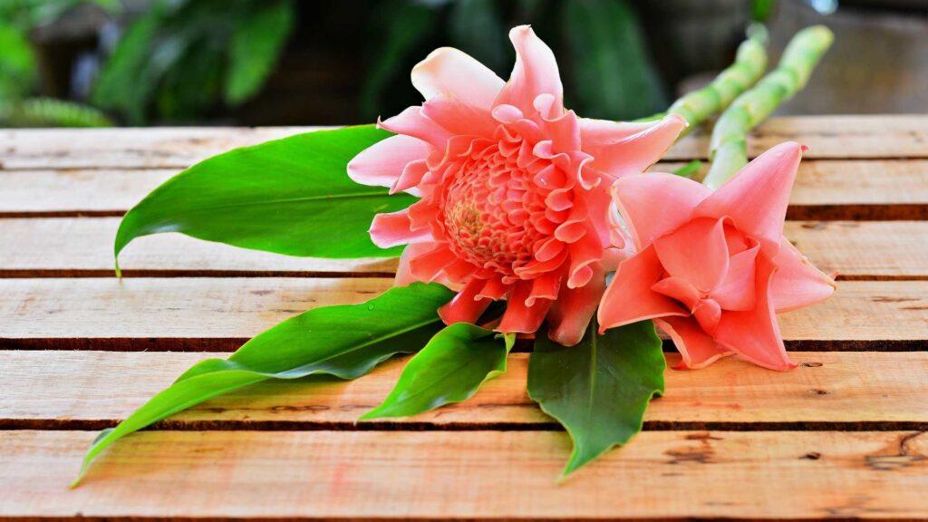 Bunga Kantan Torch Ginger Flowers